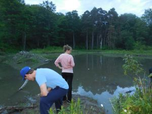 A visit to Allegany isn't complete without a quick stop at the beaver pond... searching intently for any sign of life